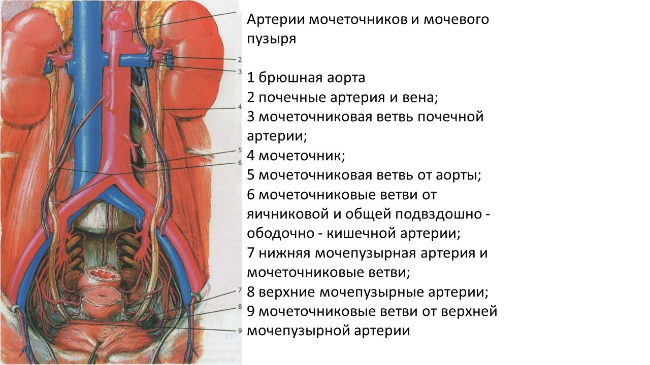 retrop-venen-ru